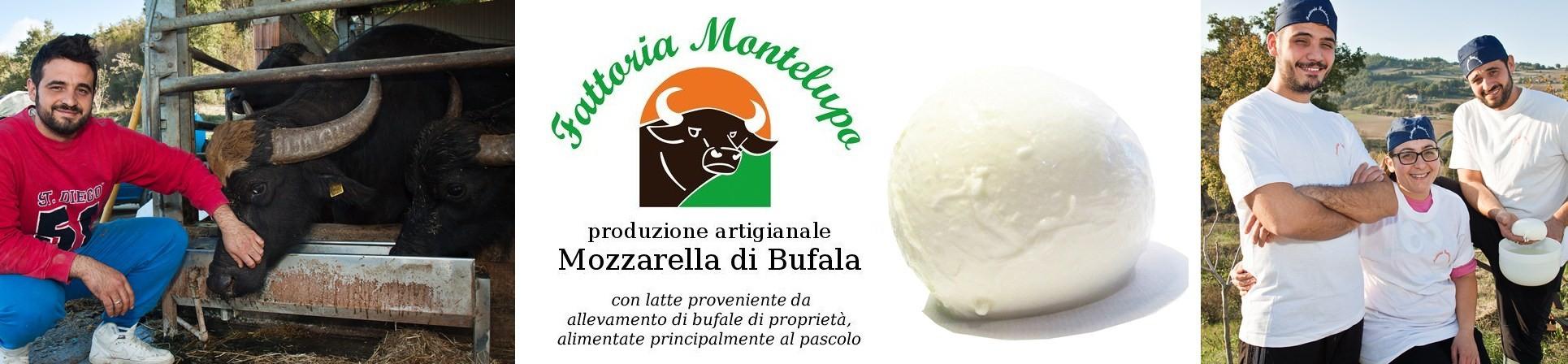 Mozzarella di Bufala - Caseificio Fattoria Montelupo - vendita online